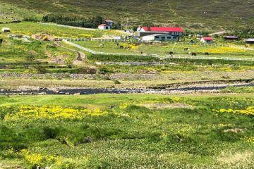 Bauerngasthof Heydalur für Ihre individuelle Island Rundreise